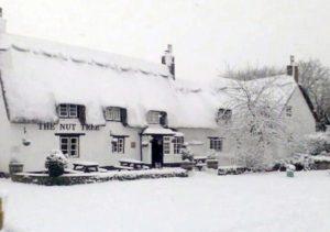 nut-tree-snow-2